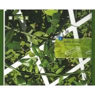 Celosia Pvc Exterior